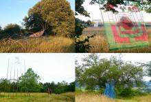 Rhizomes exposition art dans la nature