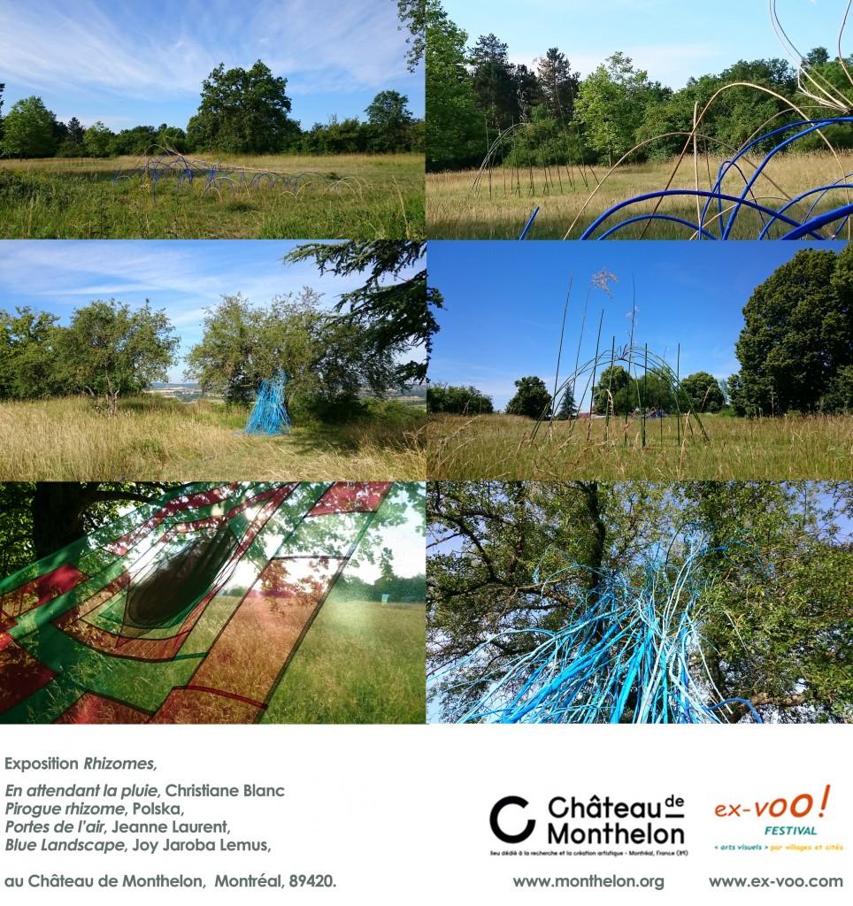 Rhizomes au Chateau de monthelon juin2015